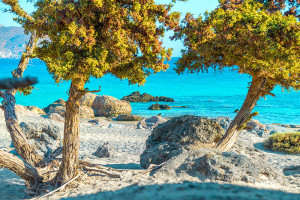 Beautiful Creatan Beach with Cedar Trees, Crete, Greece