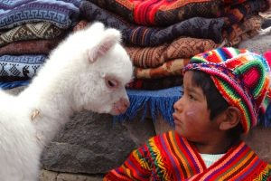 Baby llama and boy in Peru - Sacred Tour of Peru