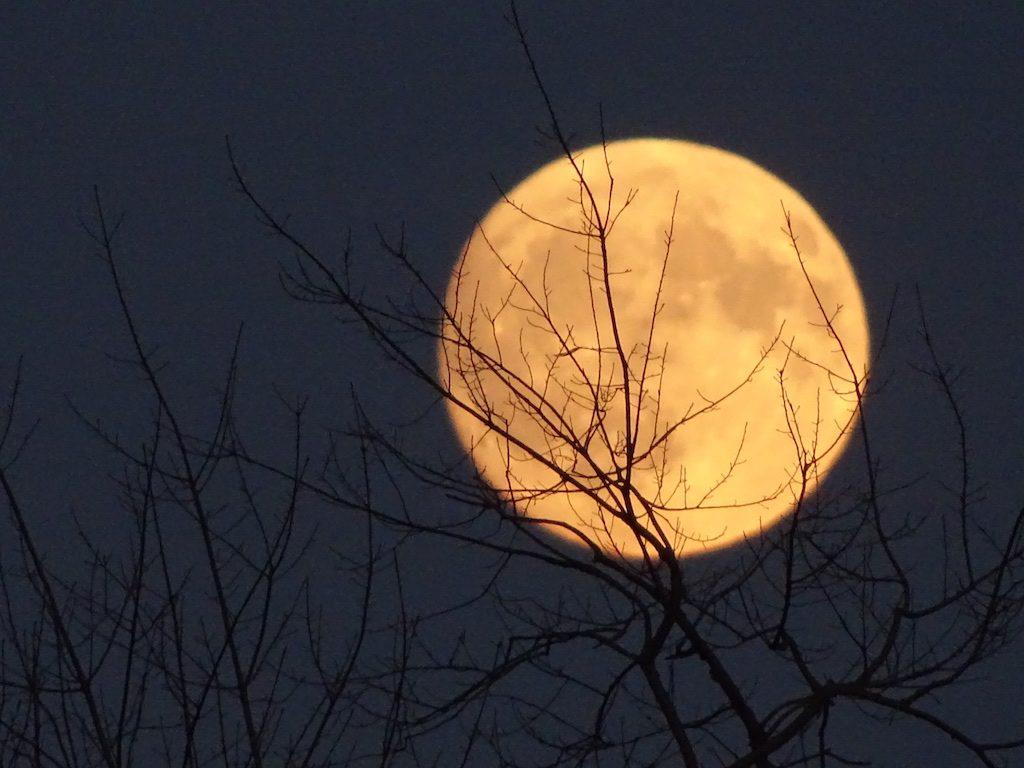 December Full Moon Newsletter